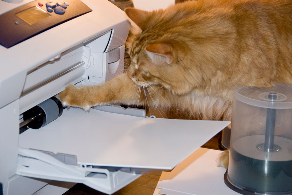 Cat sticking its paw into printer